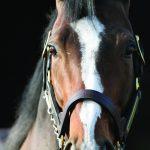 paard-klein-ght-homepagina