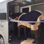 paardenvervoer